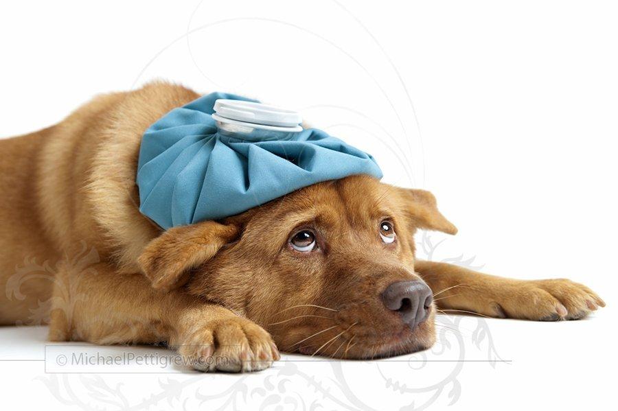 sick_dog_wb2-2.jpg